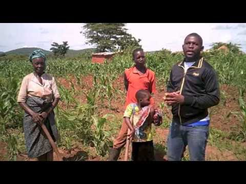 Conservation and conventional agriculture in Chipata, Zambia