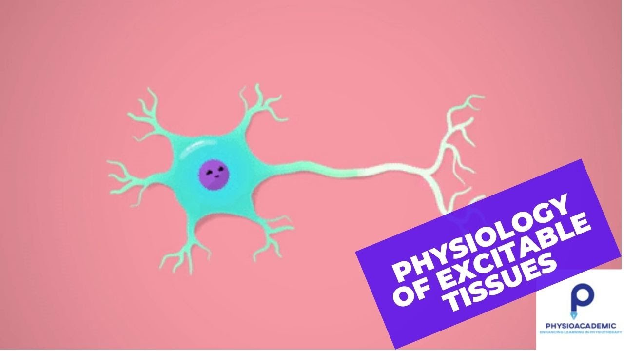 Download Physiology of excitable tissues