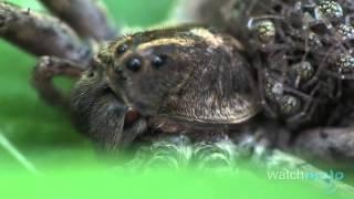 Najbrzydsze zwierzęta świata - Watch Mojo