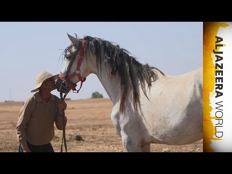 Al Jazeera World - Horses of Misfortune