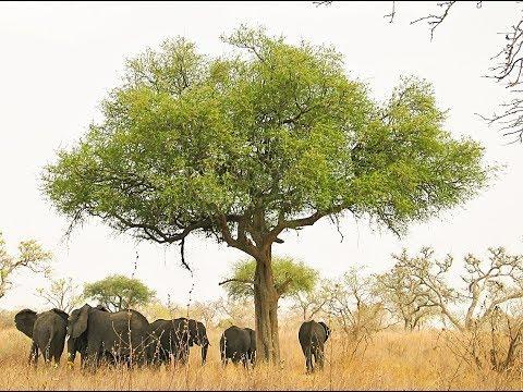 Cameroon Safari - Premium Cameroon Safari Domain Name