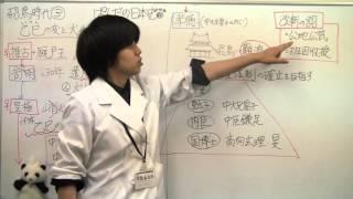 【日本史】飛鳥③乙巳の変と大化改新 (ぱんだの日本史、センター試験対策...