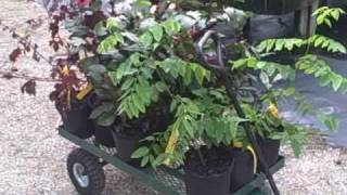 Echo Tropical Fruit and Vegetable Nursery in Fort Myers South Florida