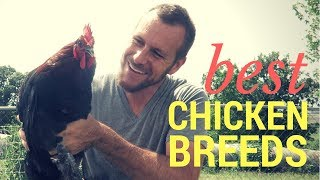 The Best Chicken Breeds