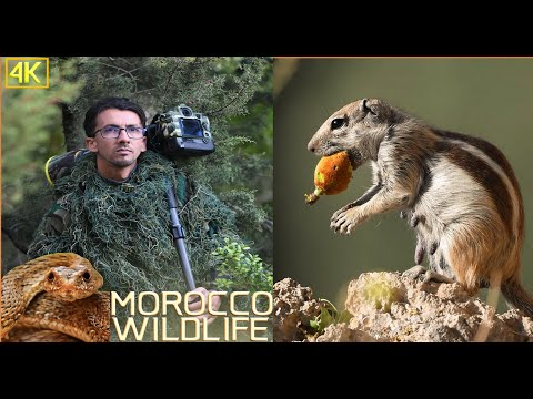 Morocco Wildlife    الحياة البرية المغربية