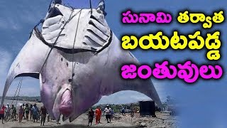 Things Found After Tsunami || T Talks