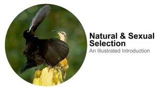 Natural Selection & Sexual Selection: An Illustrated Introduction