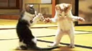 Котячі танці
