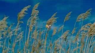 Dust in The Wind - Kansas(tradução)