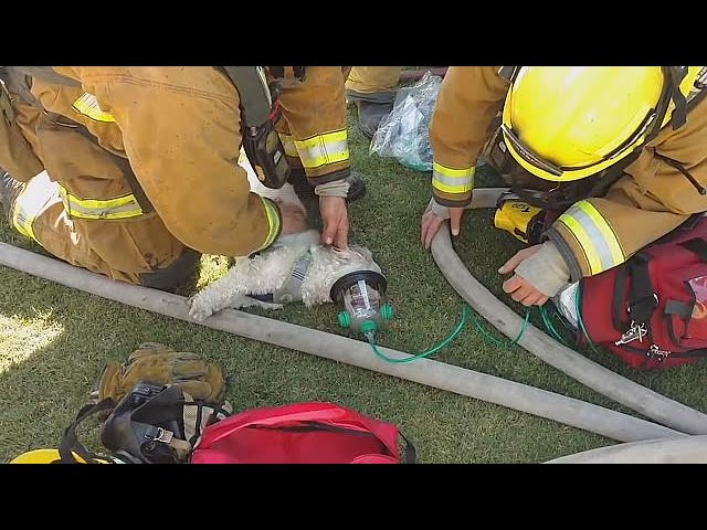 Firefighters save dog from blazing home