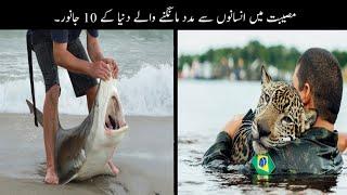 10 Animals Ask Help From People | انسانوں سے مدد مانگنے والے جانور | Haider Tv