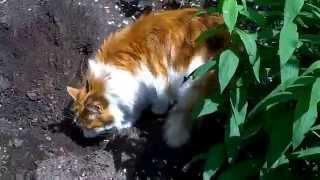 кот закапывает то что сделал