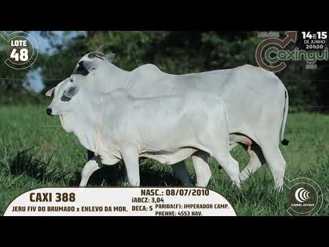 LOTE 48   CAXI 388
