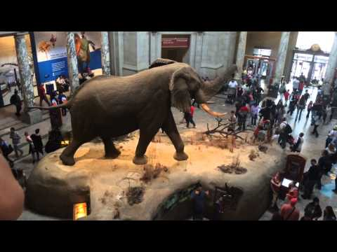 Washington D.C. - Natural History and American History Museum - Day 2 - Spring Break 2015