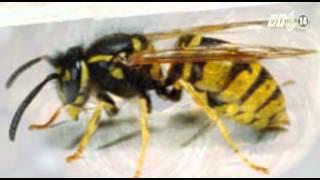 VTC14_Xử trí khi bị ong đốt