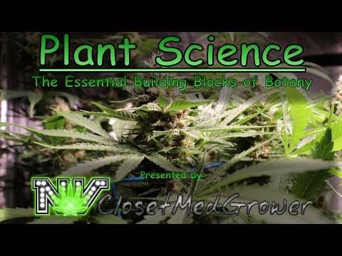 Plant Science: The Essential Building Blocks Of Botany