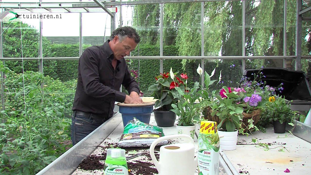 Kamerplanten verzorging en bemesten  Tuinierennl  YouTube