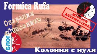 "Муравьи Formica Rufa. Операция ""Спасение"". Финал"