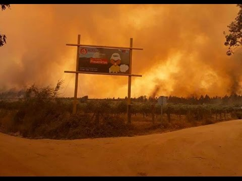 CHILE FACES THE WORST FOREST FIRE IN ITS HISTORY (LET'S HELP) JANUARY 26, 2017