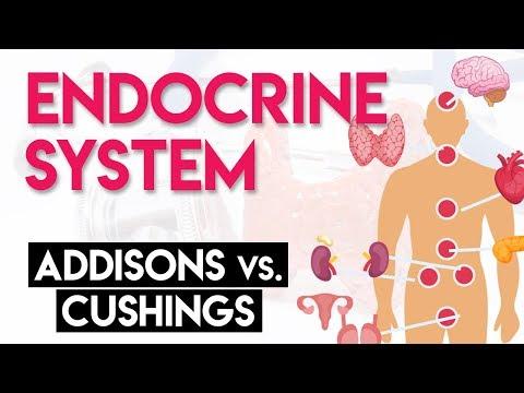 Addison's vs Cushing's   Endocrine System (Part 2)