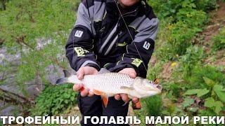 Ловля на воблеры на малой реке Отличный голавль и немало щуки