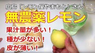【無農薬レモン・レビュー】広島県 レモン屋やまもとさん・農薬不使用の国産レモン Pesticide Free Japanese Lemon -Review-