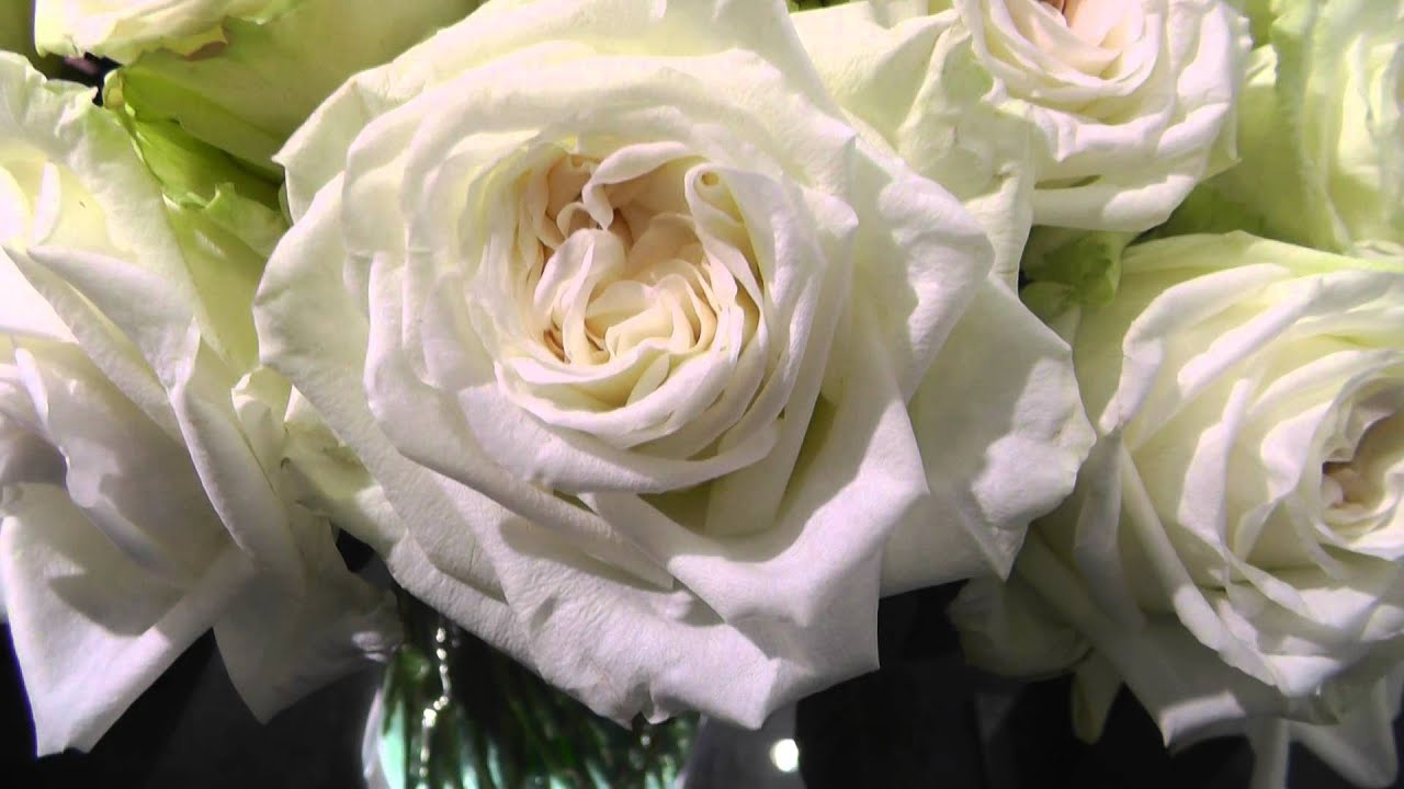 Amazing White Ou0027hara Garden Roses   YouTube Great Pictures