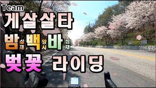 [Team게살살타] 광주 근교 자전거 벚꽃 라이딩#밤실…