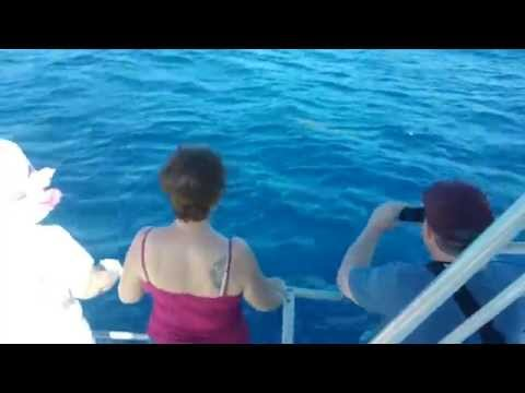 Dolphin & Whale Watching in St. Lucia