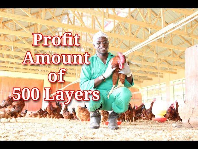 Profit Amount for 500 layers