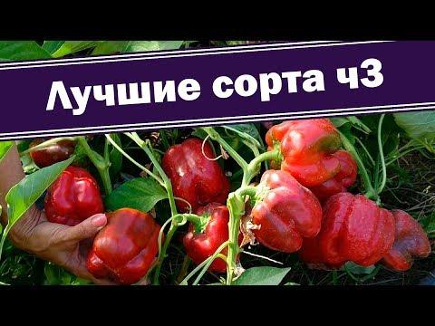 Лучшие сорта перца - кубовидный, урожайный Везувий. Часть 3