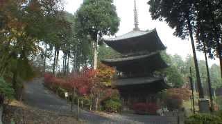 滋賀県 湖南三山 常楽寺の紅葉2 三重塔