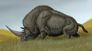 El Rinoceronte Más Grande Del Planeta