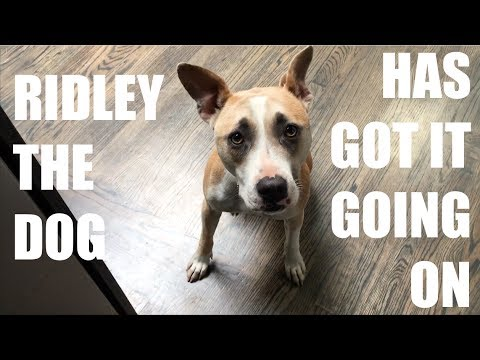 Ridley The Dog Has Got It Going On | LONG RUN KARAOKE | THE MOCKO SHOW 22