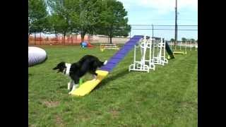 An Dog Agility Demonstration