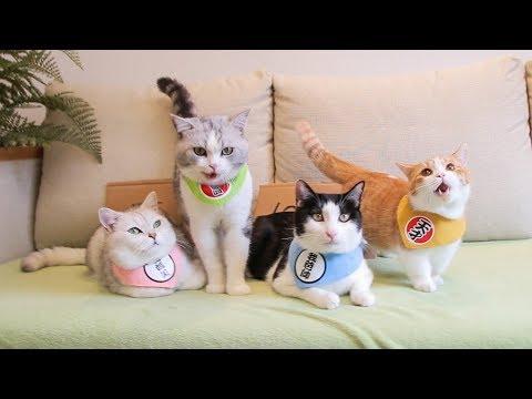 橘猫太能吃导致破产,铲屎官不得不卖猫,一块钱一斤有人要买吗?