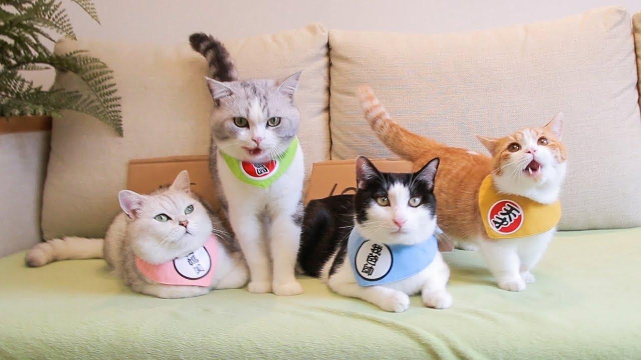 橘猫太能吃导致破产-铲屎官不得不卖猫-一块钱一斤有人要买吗