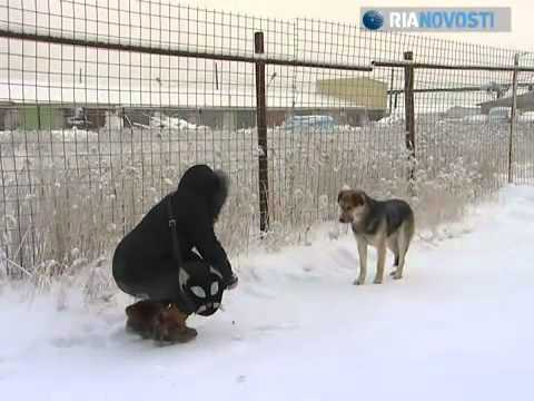 Hachiko from Yakutsk: A dog's loyalty in minus 50 degrees Celsius