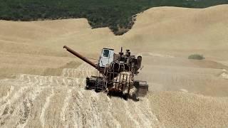 В Кайтагском районе проходит уборка зерновых культур