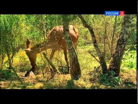 Первая серия / Из жизни животных / Правила общежития в лесу