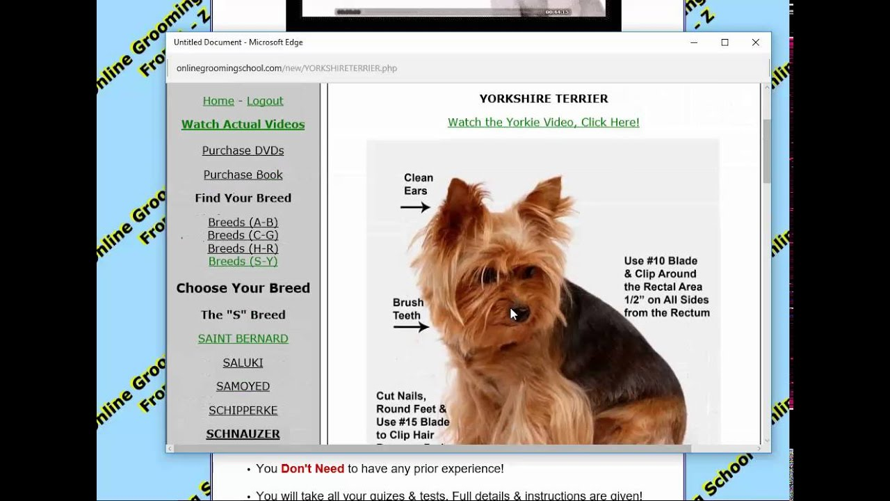 Free Pet Dog Grooming School Onlinegroomingschool Com Youtube