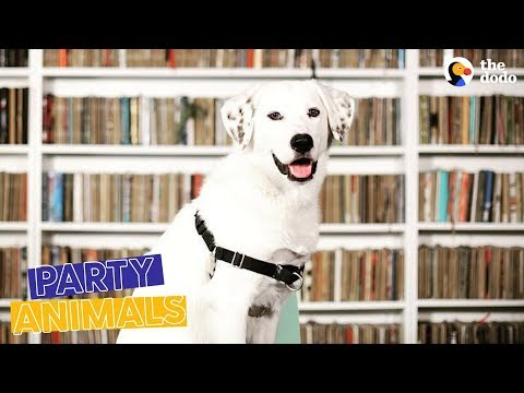 Dog Working at Library Gets A Promotion Party | The Dodo Party Animals