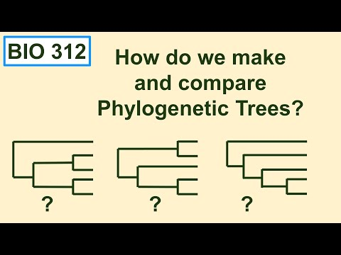 Bio 312 video 15: Phylogenetics 3, how do we make and compare trees