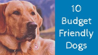 Top 10 Cheapest Dog Breeds In India [2020 Updated]