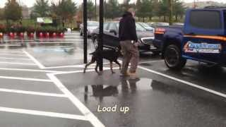 Harley 5 Month Old Doberman Puppy Maryland's Best Dog Trainers