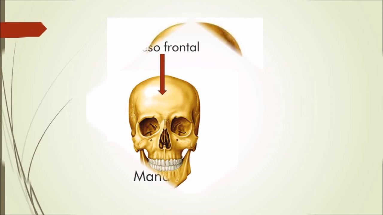 Anatomía - Ubicación de los huesos - YouTube
