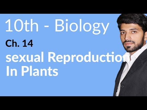 Biology 10th Class, Sexual Reproduction in Plant - Biology Chapter 14 - 10th Class Biology thumbnail