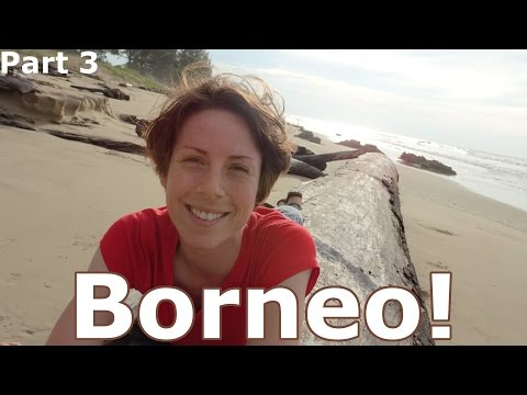 Borneo! | Road Trip in Brunei