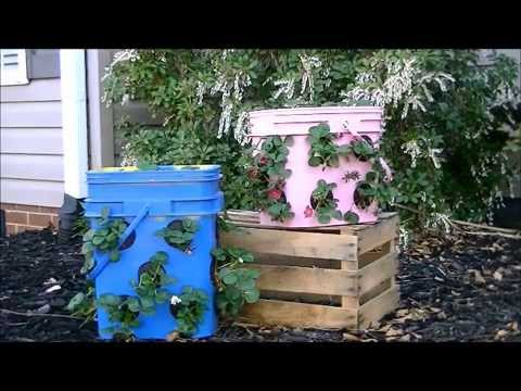 How To Make A Strawberry Pot From A Kitty Litter Bucket Youtube
