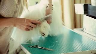 Как подстричь когти собачке в домашних условиях. Йорк.Мальтезе.